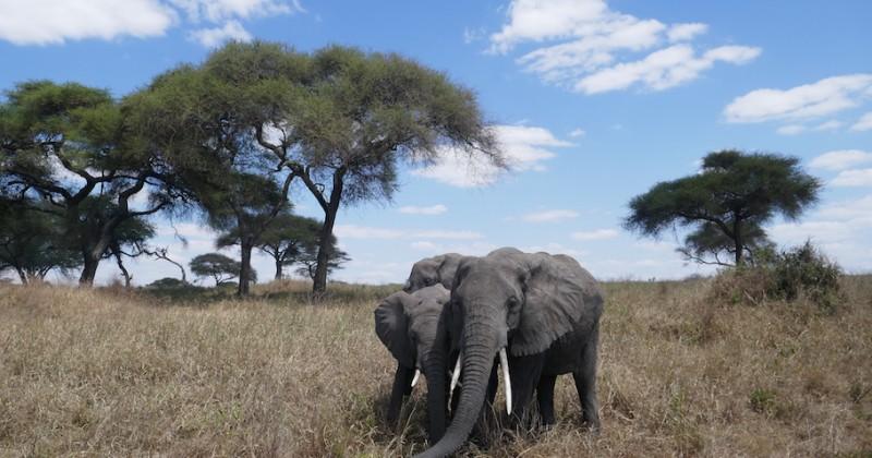 Tanzanie : les parcs du nord et Zanzibar